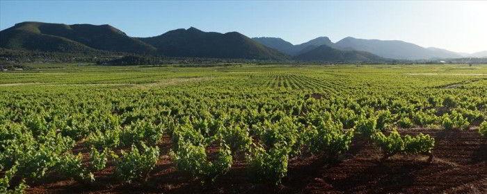 jalon valley vineyards karma properties spain
